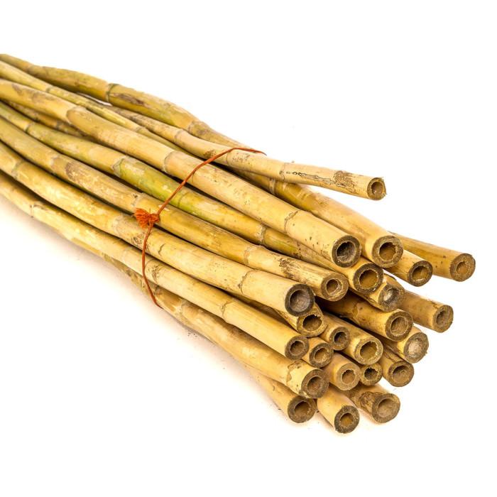 spanish reed