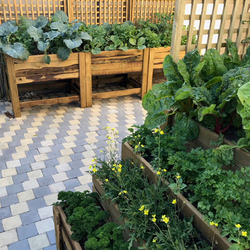 Wooden Planter boxes with plants