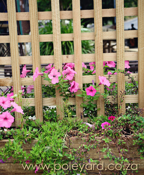 Wooden Trellises and Flowers