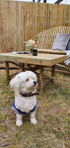 Dog with Wooden bench and table in backyard